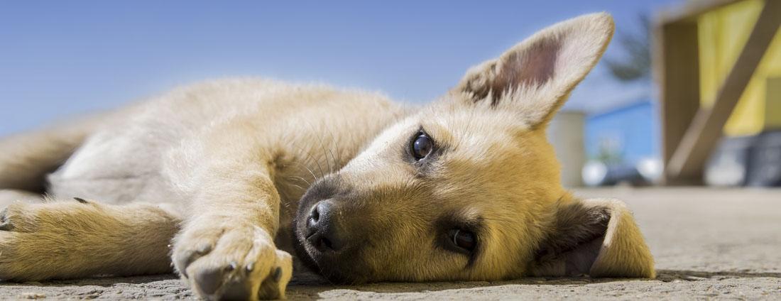 Hundepension eröffnen Genehmigungen